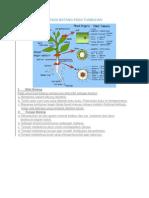Struktur Dan Fungsi Batang Pada Tumbuhan.docx Madi