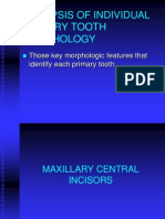 PrimaryToothMorphology Synopsis