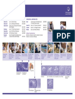 IVF Guidelines