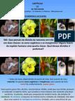 Plantas LIVRO ESPIRITOS