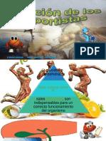Nutricion en los deportistas:Power point