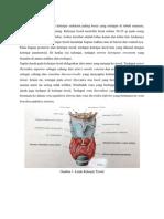 Anatomi Kelenjar Tiroid