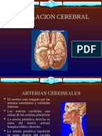 15 Irrigacion Cerebral