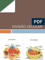 Divisão Celular AD2