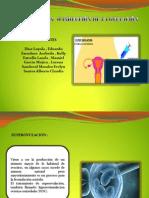SUPEROVULACION PPTS -.pptx