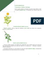 PLANTE MEDICINALE- Definitie Nomenclatura Clasificare Morfologie