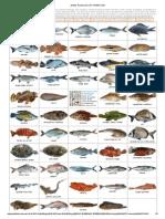 photos de poissons mer méditerranée.pdf
