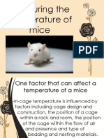 Measuring the Temperature of Mice
