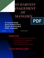 Post Harvest Management of Mangoes