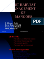 Post Harvest Management of Mangoes