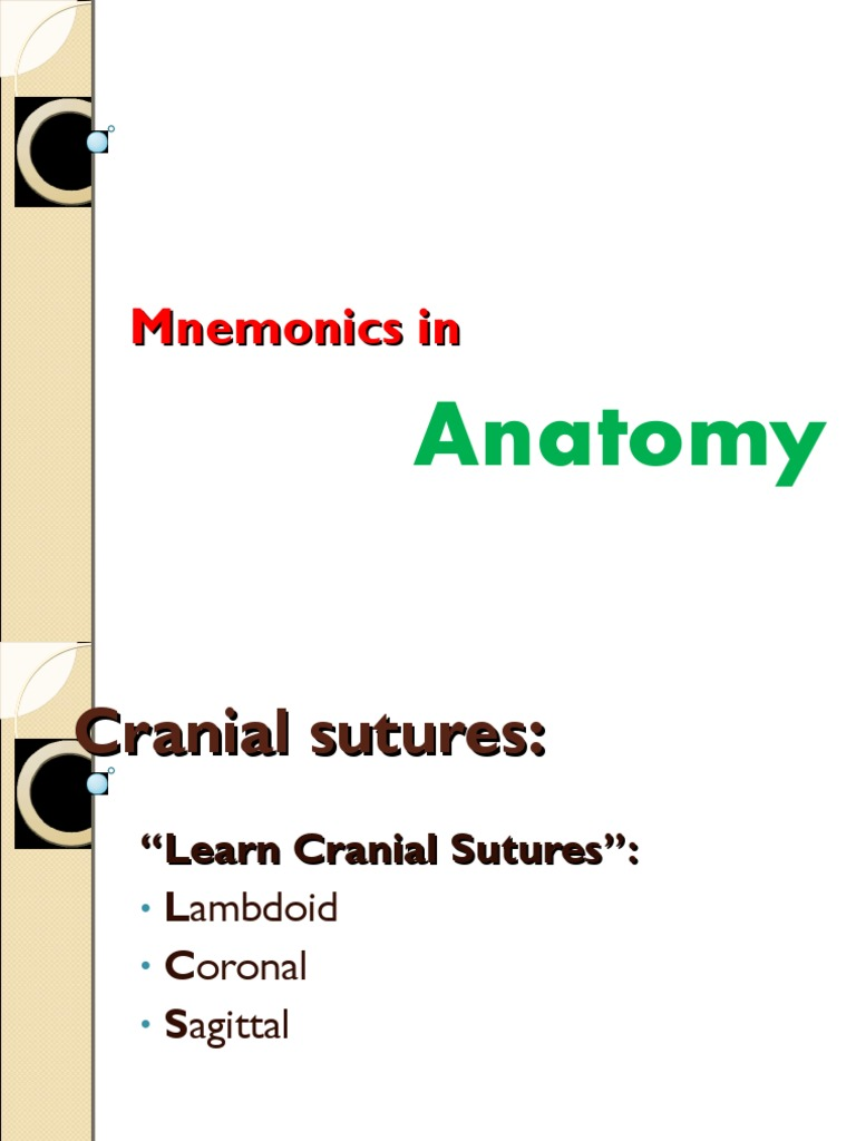 Anatomy Head and Neck Mnemonics | Skull | Human Anatomy