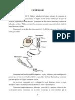 Structura Cromozomilor Si Categorii de Cromozomi