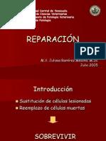 Reparacion y Cicatrización
