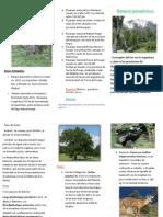 triptico bosques patagonicos