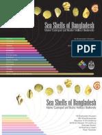 Sea Shells of Bangladesh