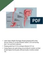 anatomi esofagus