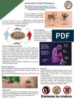 Posters Prevengamos el Chikungunya