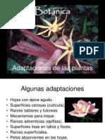Botánica_adaptaciones