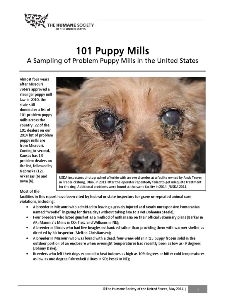 101-puppy-mills-report-2014 | American Kennel Club | Dogs