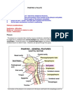 Pharynx Notes