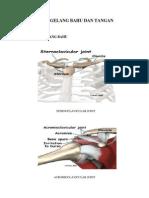 gambar anatomi
