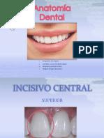 Anatomiadentaldearcadasuperiorpermanentes 140123164445 Phpapp02 Slideshare