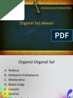 Organel Sel Hewan