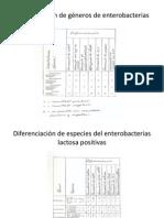Diferenciación de Géneros de Enterobacterias