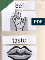 table sample for five senses
