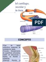 Histo Fisio Cartilago Hueso