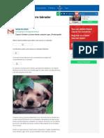 Como Educar a Tu Perro Labrador