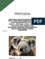 Protozoa 1