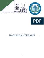Bacillus Anthracis