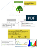 Photosynthesis Overview for JIB 224 Plant Physiology