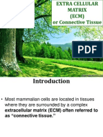 Extracellular Matrix & Connective Tissue Chemistry