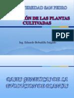 06 Evolucion de Las Plantas Cultivadas