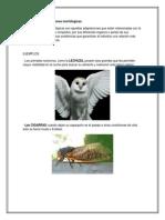 Animales con adaptaciones morfológicas y fisiologicas