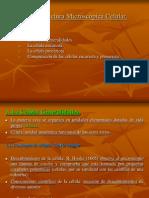 UT3. Estructura Microscópica Celular - Copia (2)