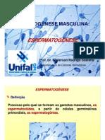 Espermatogênese 2009