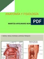 Anatomía y Fisiología para intubacion endotraqueal