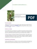 Elote o Maíz - Plantas de La Medicina Tradicional Mexicana