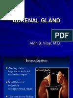 Adrenal 1 5