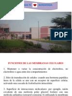 fifologia.pptx