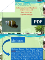 Mollusc A