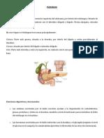 122662222 Histologia de Pancreas