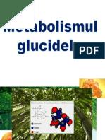 glucide 1