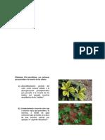Síntomas y Signos Producidos Por Organismos Fitopatógenos 2