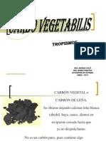 Carbo Vegetabilis Calvi - Pereyra