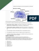 Clasificación Genoma