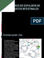Mecanismos de Expulsion de Los Parasitos Intestinales 2013
